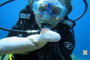 Diving in Kalymnos